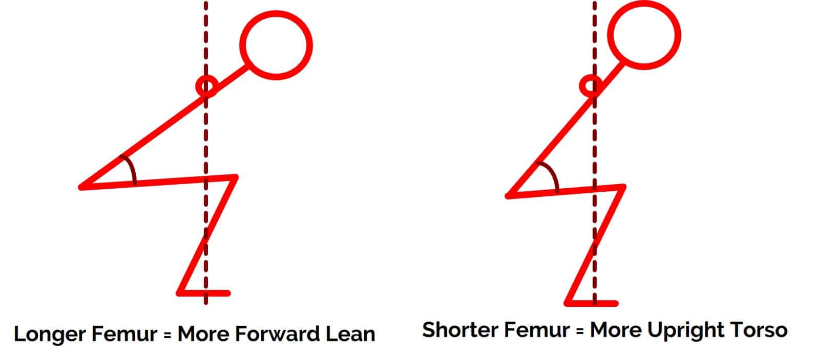 long vs. short femur in the squat